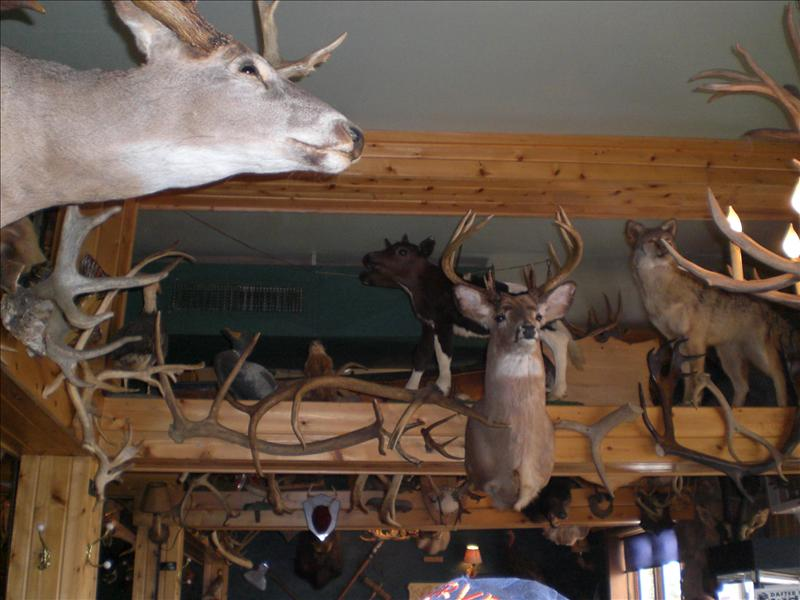 Antler's Bar...are you staring at us?