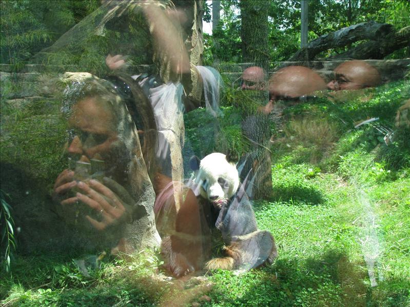 de zoo is beroemd vanwege zijn succesvolle fok van panda's