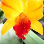 orchid world.jpg