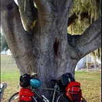 Big old Tree and little old Bike