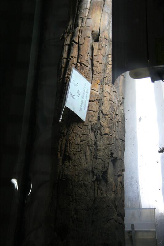 秦朝留下,泡在溫泉中的木頭