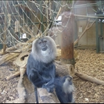 Chester Zoo 2008