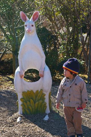 kangaroo and boy