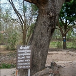 THE KILLING TREE, CHOEUNG EK