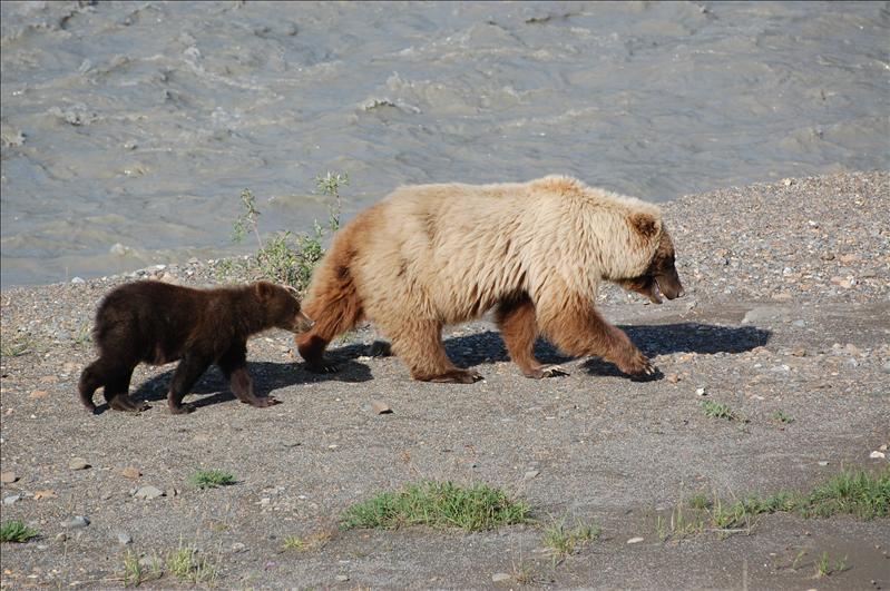 Momma bear & baby bear