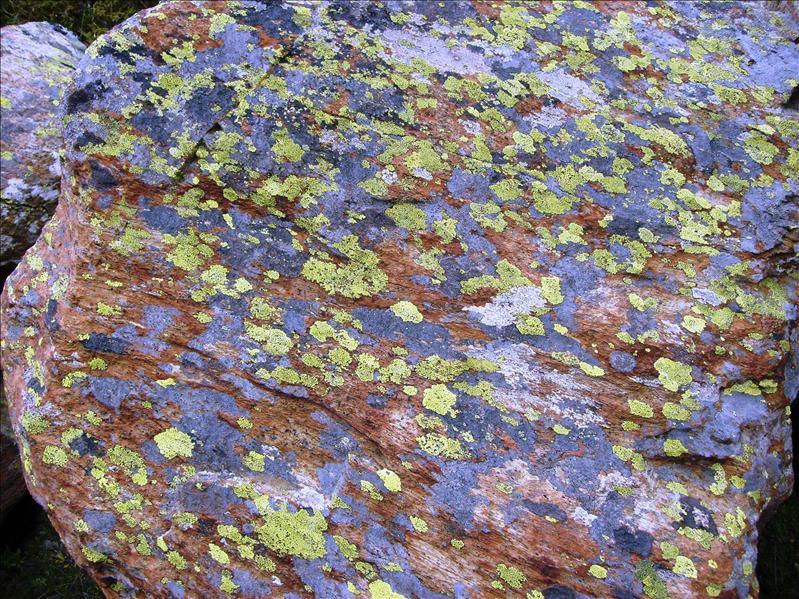 stone moss•Fluhalp•2008