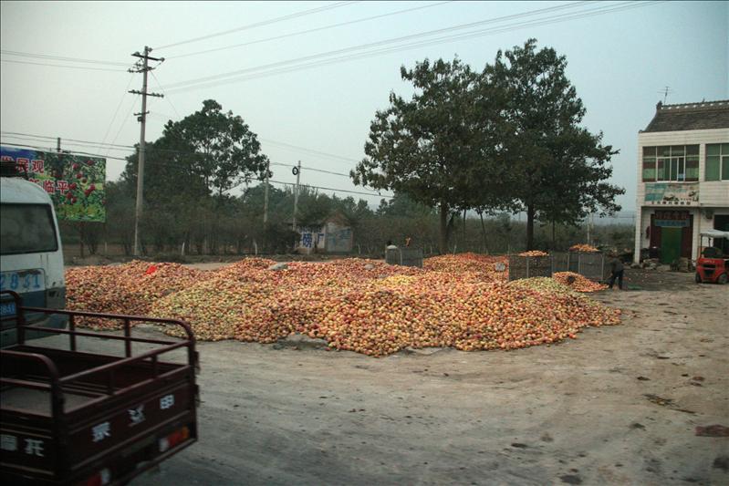 到處都是這樣堆積如山的蘋果