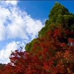 Arashi-yama