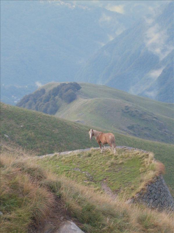 cavallo•Pian Vada•2009