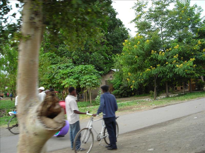 road•Tanzania