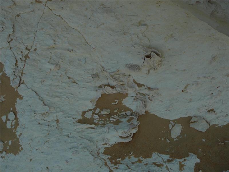 Siwa - Woestijn fossielen 2