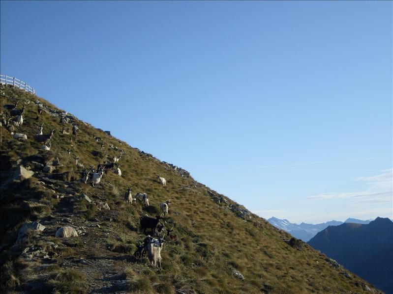 Monte Pisello•Valtellina•2009
