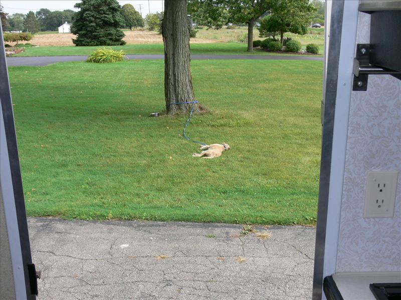 Wingnutt in the front yard