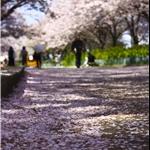 10 Apr '09 - Sakuranomiya