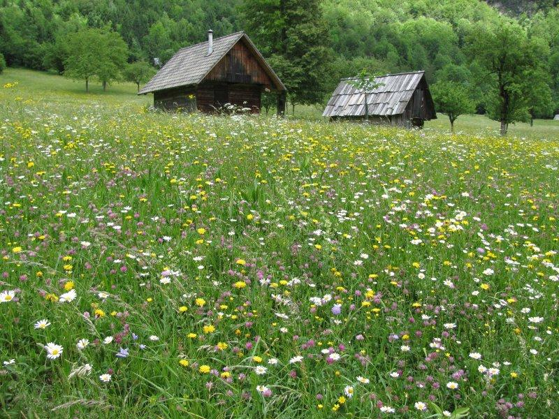 When we arrived the hay meadows were full of flowers...