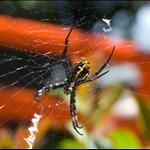 Cute spider :)