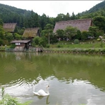 the takayama