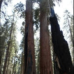 sequoia park, ca sept 2008