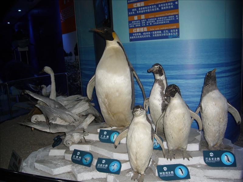 企鵝展品 @ 海底世界