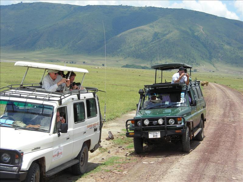 tourists•safari