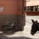 Donkey V.S. Scooter
