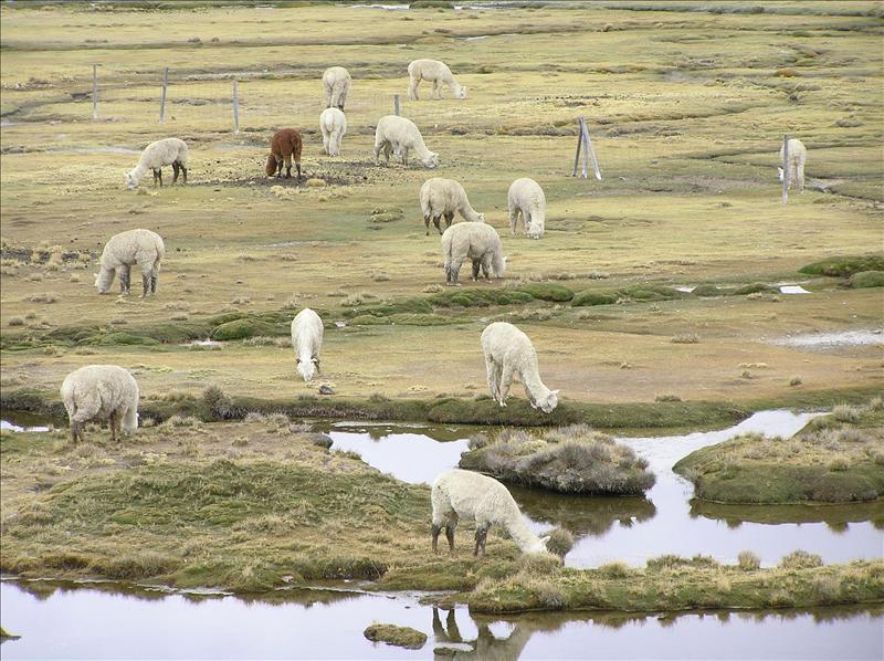 Salinas y Aguanda Blanca Natural Reserve