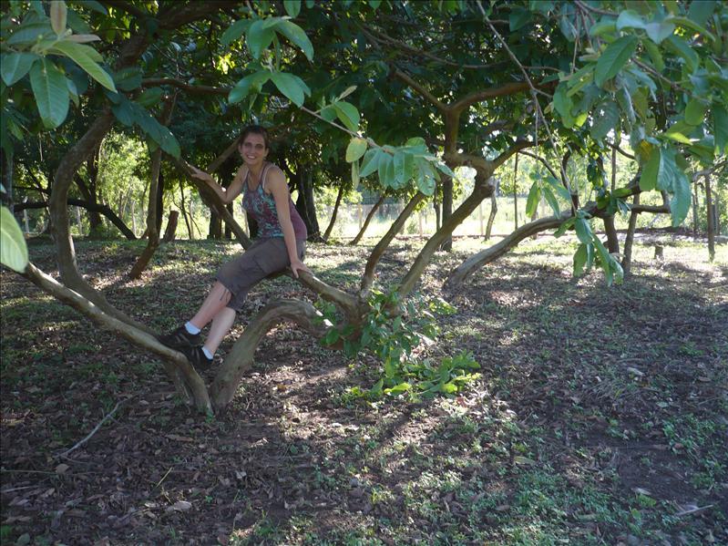 Anthea auf einem Guayababaum ;)