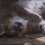 sleeping pussy