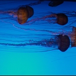 Jelly fish. Ever so graceful.