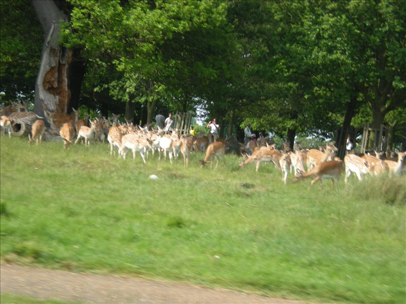 Richmond Park - 26th May