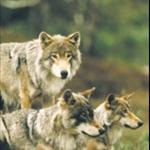 ulv1.jpg