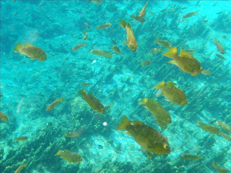 Onder water genomen