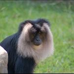 at zoo.jpg
