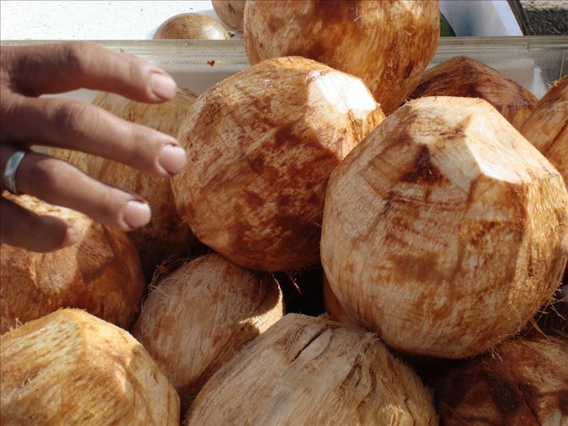 Kauai - Coconuts at Farmer's Market