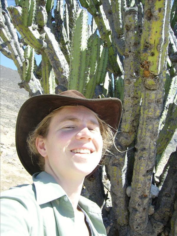 cactus•Aline