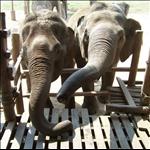 ELEPHANT NATURE PARK, MAE TAENG, CHIANG MAI