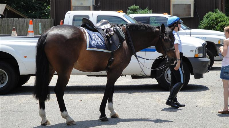 A horse from the mounted park police