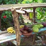 carib fruit stand in a island of gardens