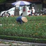 Local Worker, Hanoi