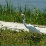 Amelia Island & Fernandina Beach