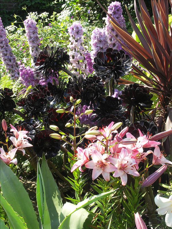 Agave, Lily, Aeonium, Cordyline, Delphinium