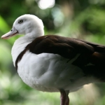 BirdPark-04.jpg