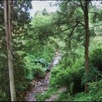 Crarae Garden