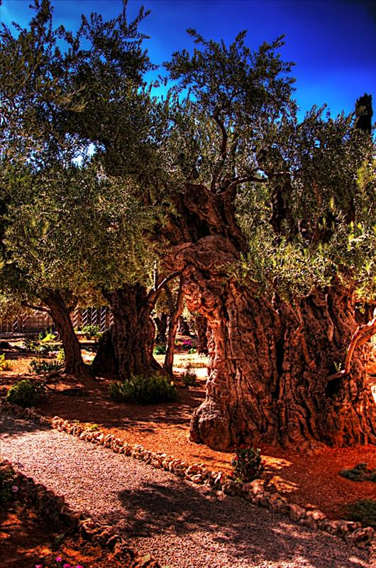 Gethsemani (Gethsemane)