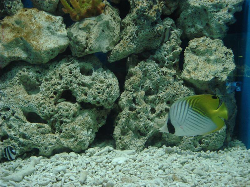 Paruparung dagat