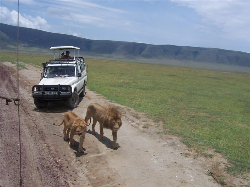 tourists•lions•Ngorongoro