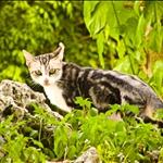 A cat spy!!!!