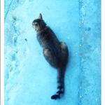 人魚與貓3.JPG