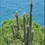 Cactus right by the sea