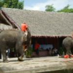 Elephant..elephant...